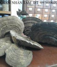 Nấm linh chi rừng Việt Nam